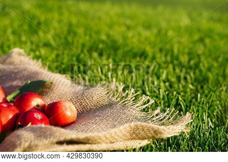 Red Apples Are Scattered On Burlap Cloth On The Grass. Autumn. Farm Natural Eco Products. Free Space