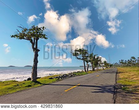 Coastal Road Lined With Palm Trees, Overlooking Tropical Ocean, Puerto Rico, Usa.