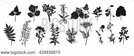 Set Of Silhouettes Of Botanical Elements. Herbarium. Branches With Leaves, Herbs, Wild Plants. Garde