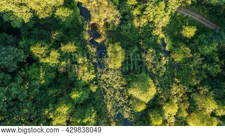 Forest River Crosing Riparian Tree Stand And Road, Bialowieza Forest, Poland, Europe