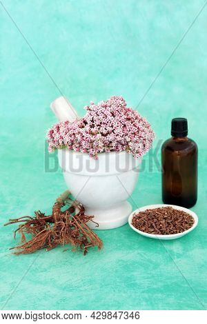 Valerian herb flowers and dried root. Used in herbal plant medicine as a tranquillizer, treats insomnia, anxiety, headaches, digestive problems, menopause symptoms and fatigue.
