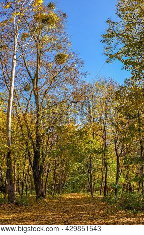 Sofiyivsky Arboretum On A Sunny Autumn Day. Uman, Ukraine