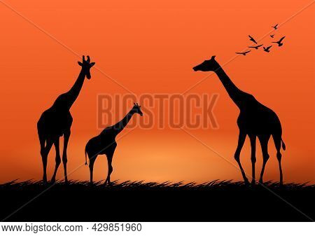 Graphics Image Giraffe At The Forest With Twilight Silhouette Background Vector Illustration