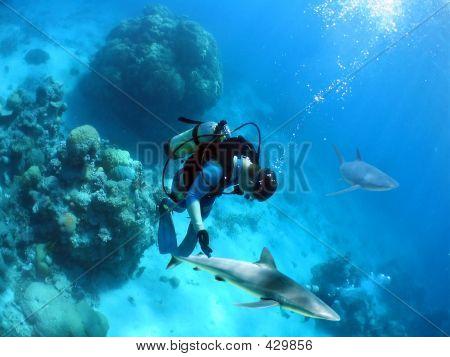 Lookdown Diver