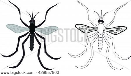 Realistic Illustration Of Mosquito Or Little Fly. Isolated On White Background. Insects Bugs Worms P