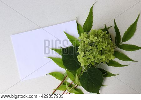 Close-up Of Blank Sheet Of Paper With Green Leaves And Flower On White Table.  Greeting Card Mock-up