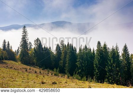 Coniferous Forest On The Hill. Nature Scenery On A Bright Foggy Morning. Beautiful Mountain Landscap