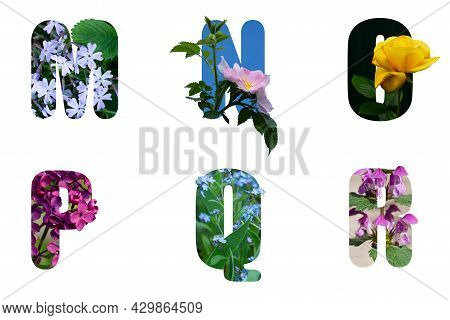 Alphabet Letters M N O P Q R Made From Flowers Of Different Vidos And Varieties .front Side Of Flowe