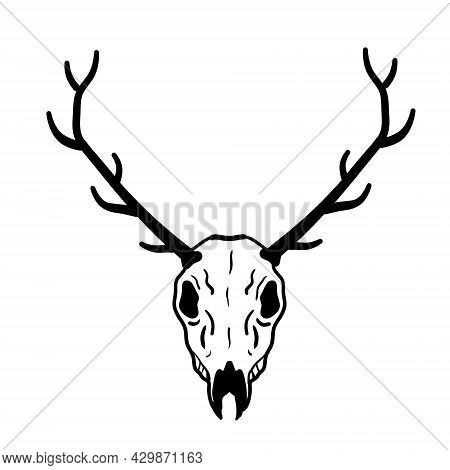 Skull Of Deer. Hunting Trophy With Horns. Antler Of Stag Or Reindeer. Scary Black And White Drawing