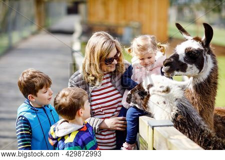 Cute Toddler Girl, Two Little School Kids Boys And Young Mother Feeding Lama And Alpaca On A Kids Fa