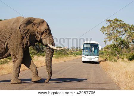 Elephant cross a road