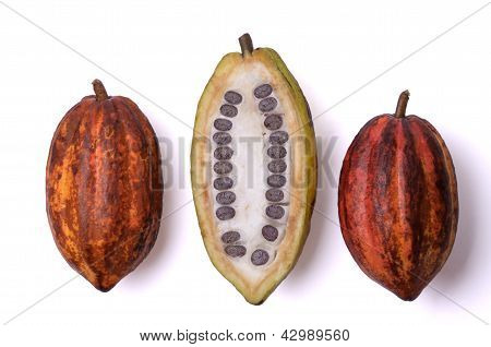 Fresh Cocoa Fruits With Beans