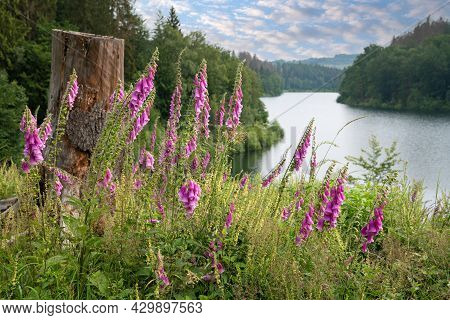 Panoramic Image Of Wild Flowers With The Genkel Reservoir In The Background, Marienheide, Bergisches