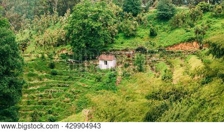 Beautiful Scenic Panorama Summer View Of Rose Flowers Plantation On Hillside In Botanical Garden In