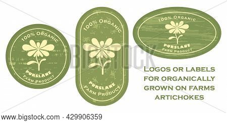Three Logo Patches With King Oyster Mushroom Icon And Texture. Badge For Packages With Organic Farm