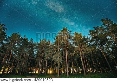 Green Trees Woods In Park Under Night Starry Sky With Milky Way Galaxy. Night Landscape With Natural