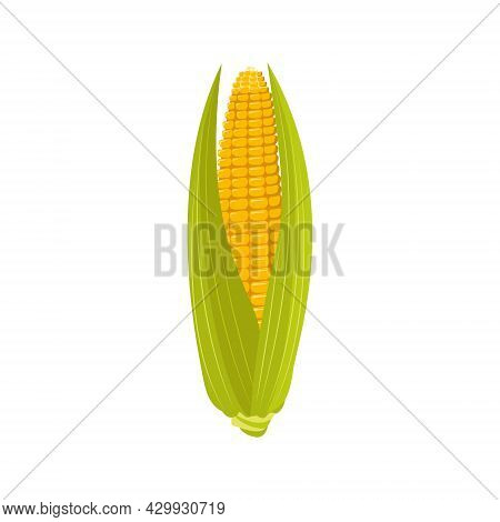 Corn On The Cob With Leaves And Grains. Summer And Autumn Harvest, Delicious Food. Source Of Vitamin