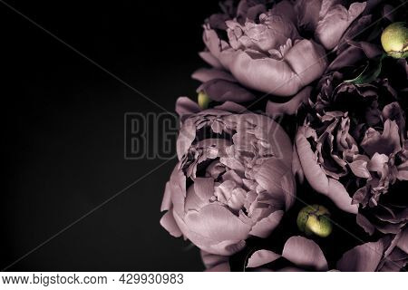 Surreal Peonies Bouquet On Black Background, Soft Focus. Dark Spring Or Summer Floral Background. Fe