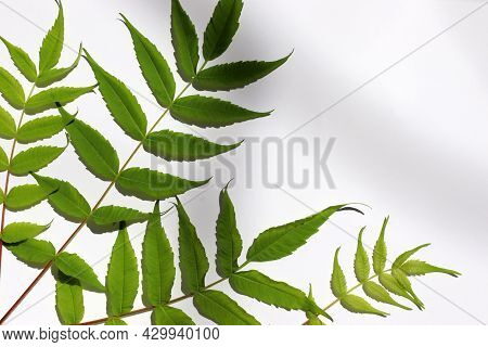 Close-up Of A Blank Sheet Of Paper With Leave Shadows On White Table Background.  Greeting Card Mock