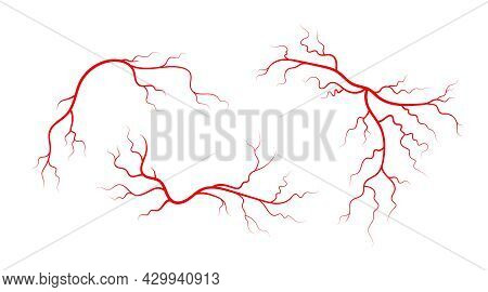 Set Of Human Veins And Arteries. Red Branching Blood Vessels And Capillaries. Vector Illustration Is