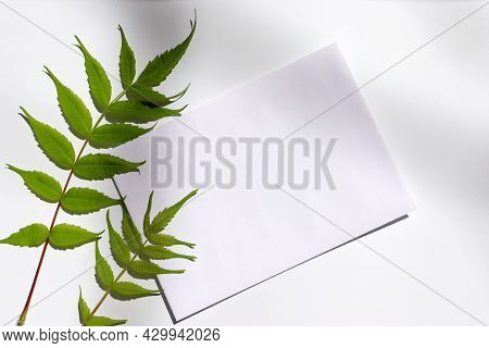 Close-up Of Blank Sheet Of Paper With Green Leave On White Table. Greeting Card Mock-up. Flat Lay, T