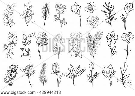 Set Of Flower Leaves And Branches For Creating Cards, Banners And Backgrounds Vector Illustration. C