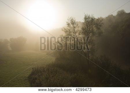 Early Morning Sunrise Through Mist, Rural Scene Landscape