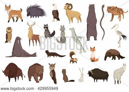 Animals Of North America. Nature Fauna Collection. Geographical Local Fauna. Mammals Living On Conti