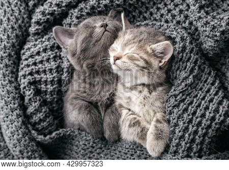 Couple Kittens Hugging In Love Friendship Relationships Napping Have Sweet Dreams In Crib. Kittens G