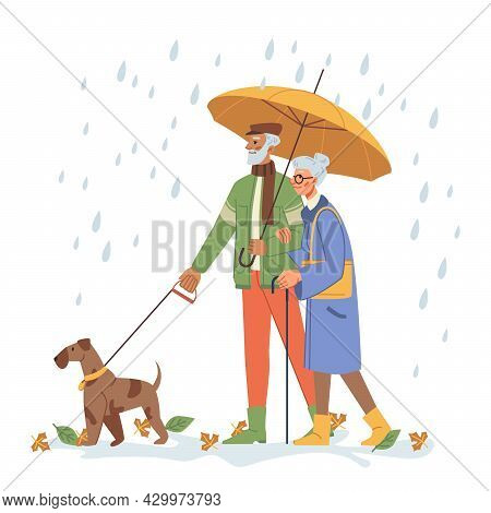 Grandfather And Grandmother With Umbrella Walking Dog Outdoors. Senior People With Pet On Leash Stro