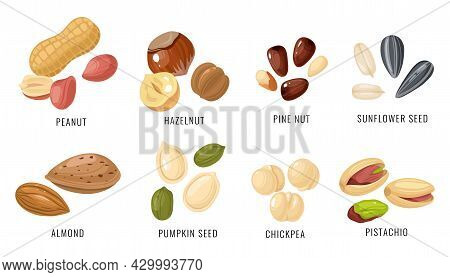 Nuts And Seeds. Various Nut, Bean And Seed In Shell And Peeled, Peanut And Hazelnut, Almond And Chic
