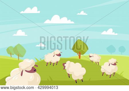 Cute Sheeps Grazing. Green Meadows And Blue Sky, Countryside Summer Sunny Landscape, Farm Animals Ou