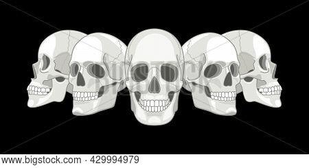 Human Skull Sides. Humans Skulls Sketch Vector Illustration, Smiling Mouth Death Bone, Anatomy Face