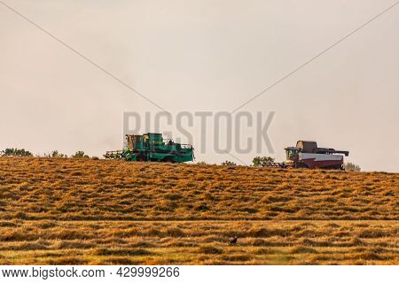 Wheat Field. Two Combine Harvesters Are Harvesting Grain Crops On A Sunny Summer Evening. Harvesting