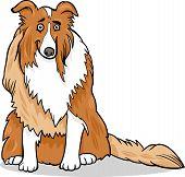 Cartoon Illustration of Funny Collie Purebred Dog poster