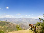 Mule standing on the hill and enjoying the view of Andean Mountains poster