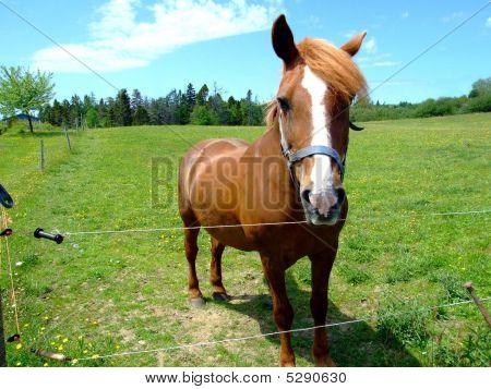 Bay Horse Close Up