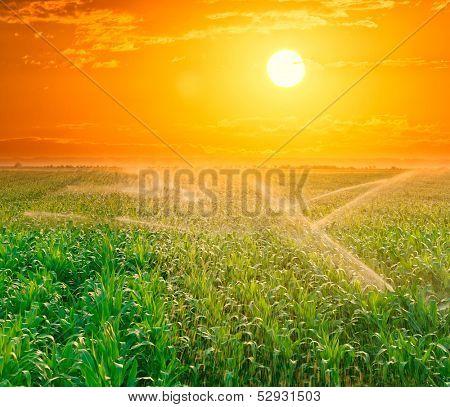 Irrigation pivot on the corn field at summer sunset.
