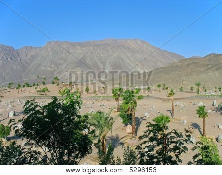 Kind on palm trees sand and mountains. Egypt Taba. poster