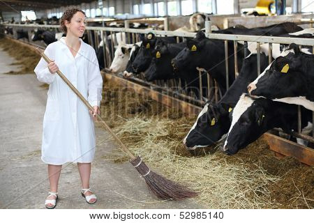 Happy woman in white robe sweeps floor in large farm with many cows.