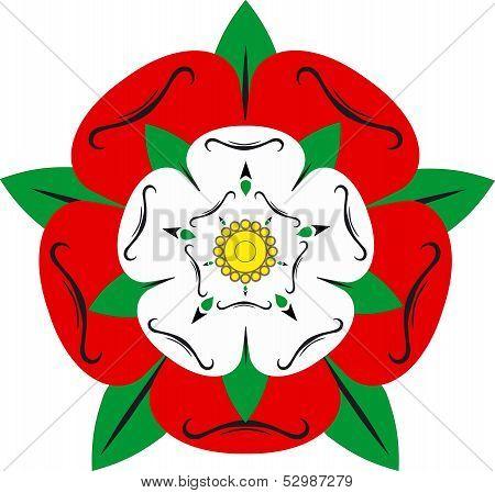Tudor Rose - Illustration