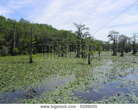 Caddo Lake 4