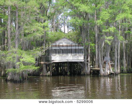 Caddo Lake 9
