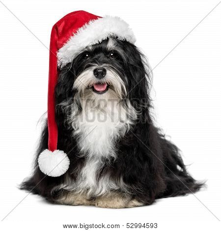 Funny happy sitting Bichon Havanese dog in a Christmas - Santa hat and with white beard. Isolated on a white background poster