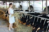 Woman in dress holds hay near stall with cute calves in big cow farm. poster