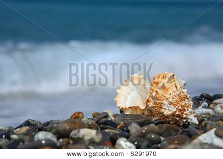 Seashell On Stone Seacoast
