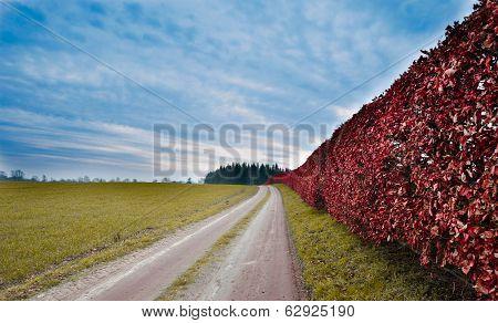 Vibrant Hedgerow