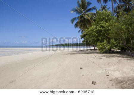 Beautiful Tropical Beach In Brasil