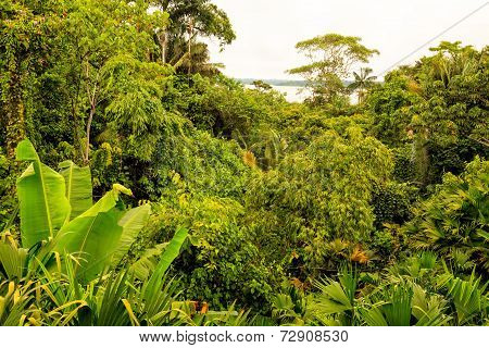 Tropical Rainforest Landscape Of National Park Yasuni, South America