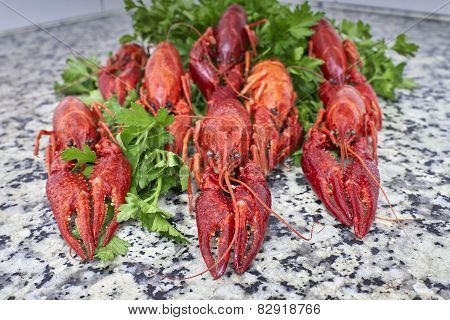 Red river crayfish on green parsley on kitchen grey granite worktop in front perspective close-up poster